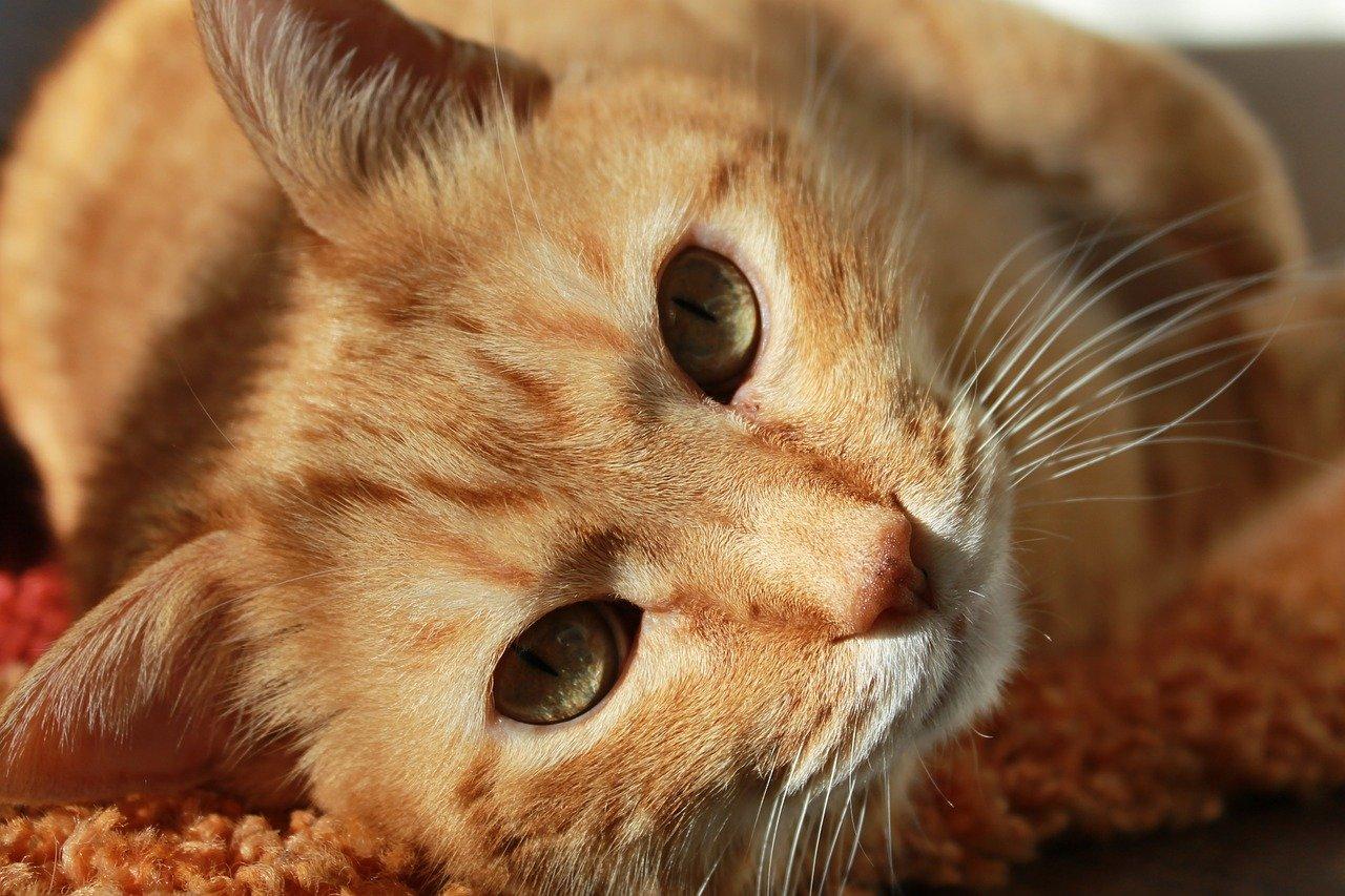 Jakie są kierunki studiów dla miłośników zwierząt?