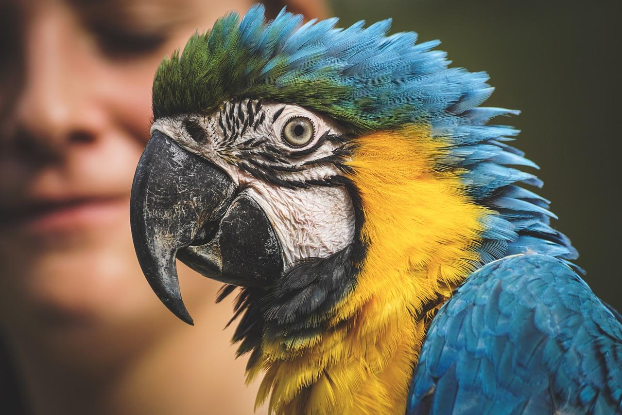 Jakie są minusy posiadania papug?