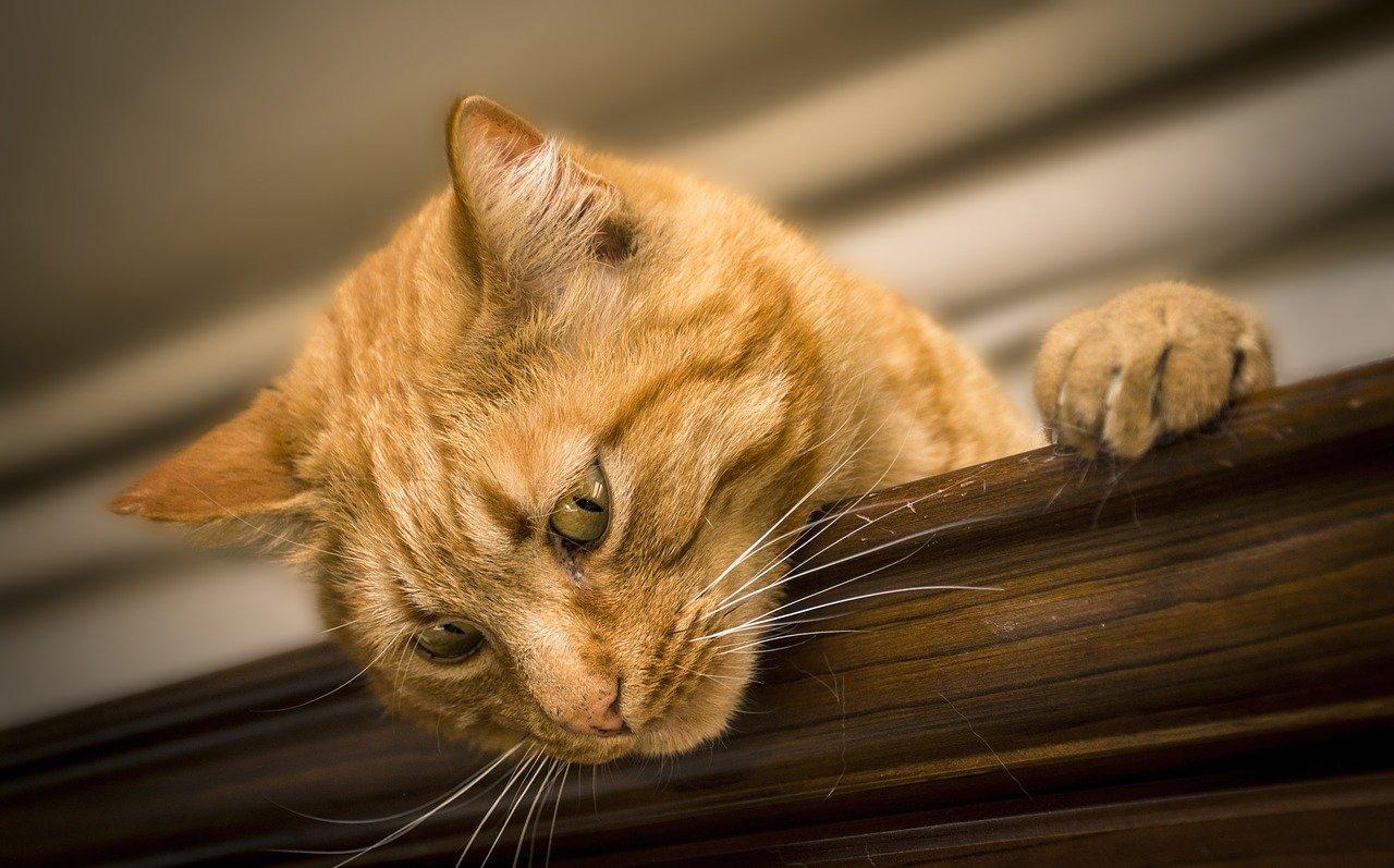 Gruźlica u kotów.
