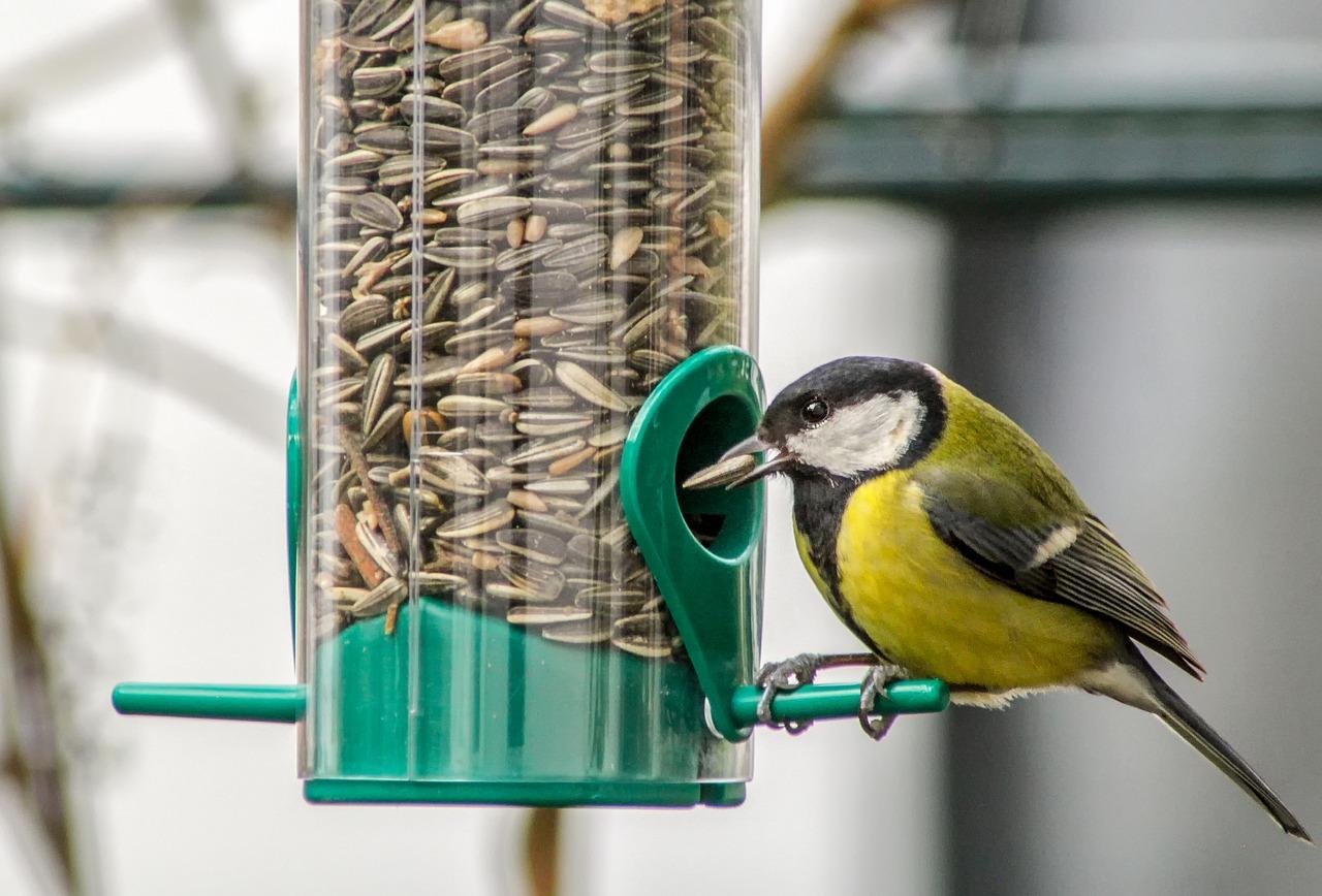 Czy można dokarmiać ptaki zimą?