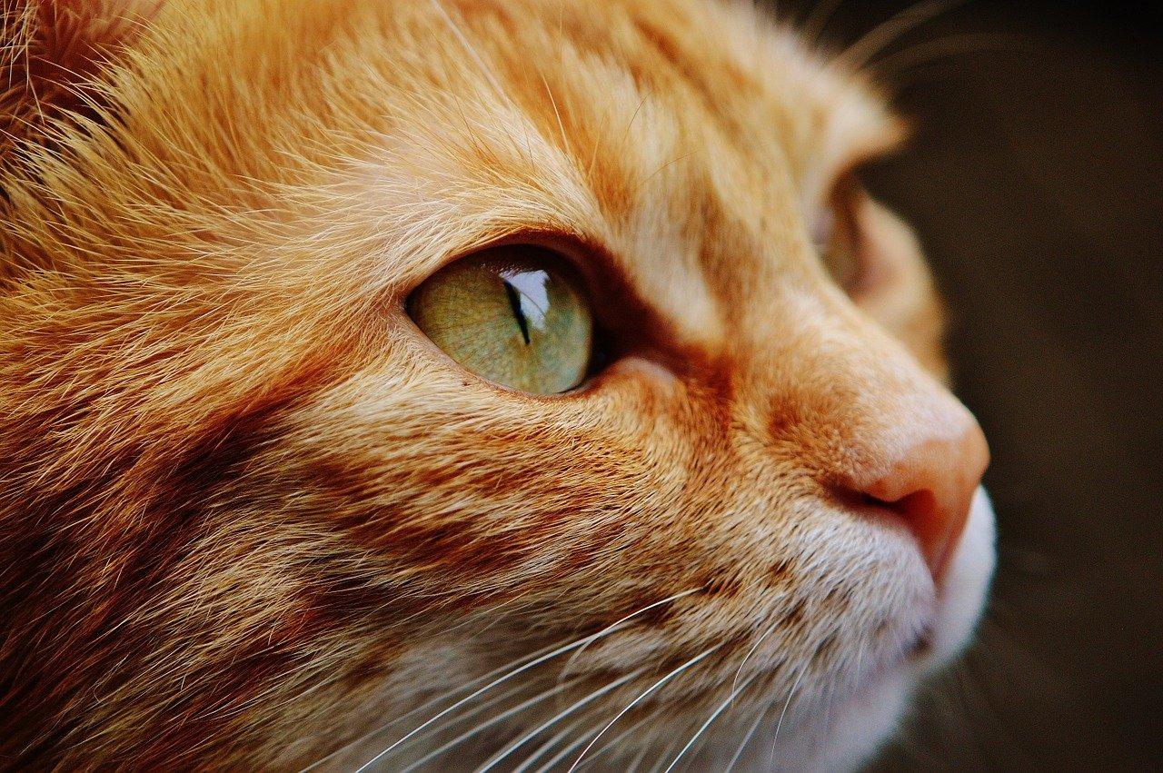 Jak zneutralizować zapach kociego moczu?